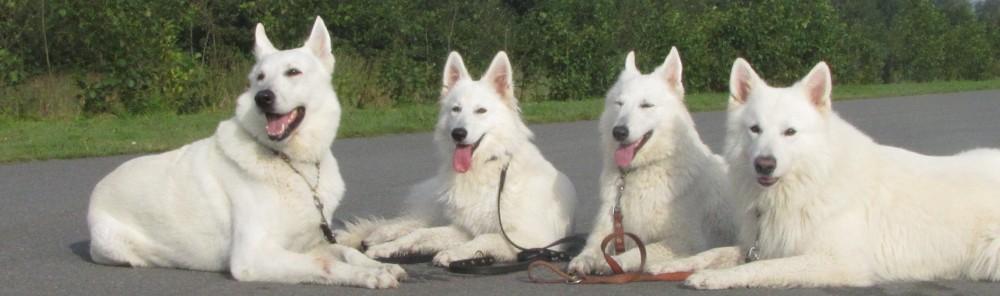 Dejoni's  Zwitserse Witte Herders.
